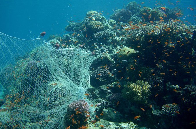 Biodegradable gillnets could help rid the ocean of ghost fishing