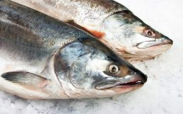 Half of the world's farmed fish could have hearing loss