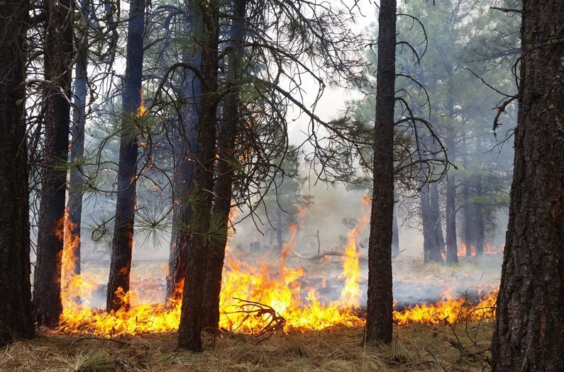 To make forests more climate resilient, we need to let some fires burn