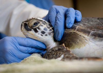 A health care revolution … for wildlife?