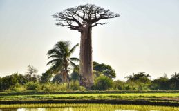 Trees improve the environment—and bottom line—on small African farms