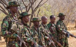 "Is ""green militarization"" the best way to save rhinos?"