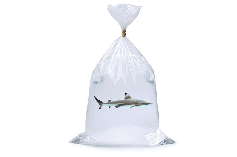 Small shark in a plastic bag