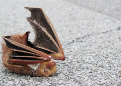 Wind energy is tough on bats—but it doesn't have to be that way
