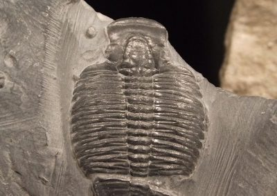 The disturbingly modern chemistry of 500 million-year-old fossils