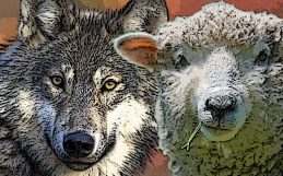A peaceful end to the wolf wars?