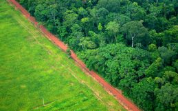 In Brazil, signs that a soy moratorium is slowing down deforestation