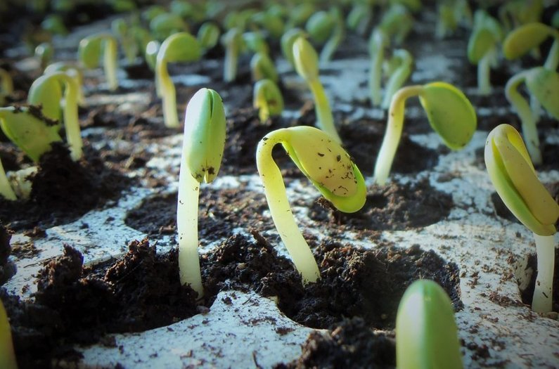 Building a better soybean