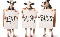 Trading beef for insects—or even chicken—would save a third of arable land