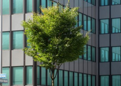 City plants can actually decrease air quality during heat waves