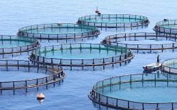 By farming fish in the ocean, the world could far surpass its seafood needs