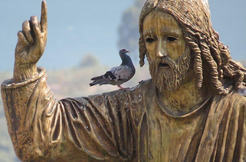 Translating the language of birds