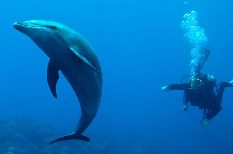 The new canary in the coal mine: dolphins
