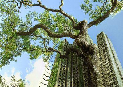 Megacity trees yield mega benefits