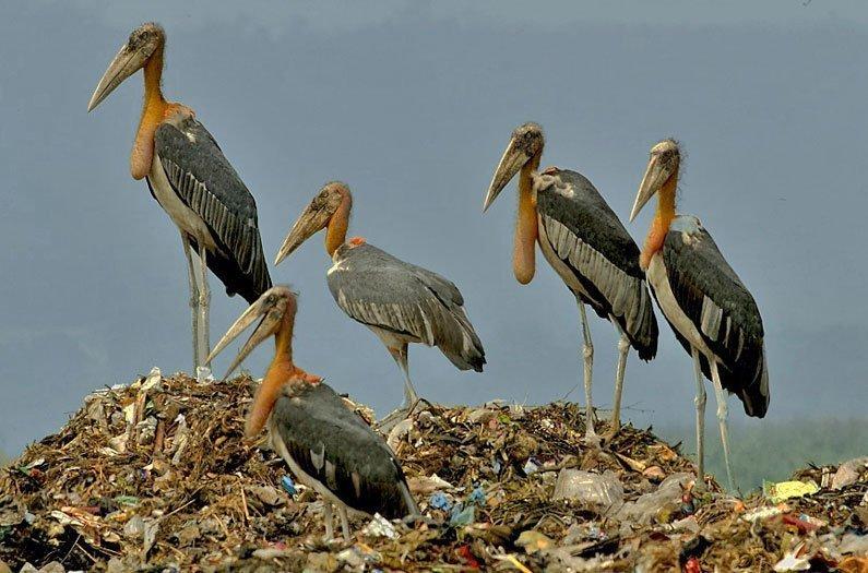 Un ecosistema pasado por alto: los basureros