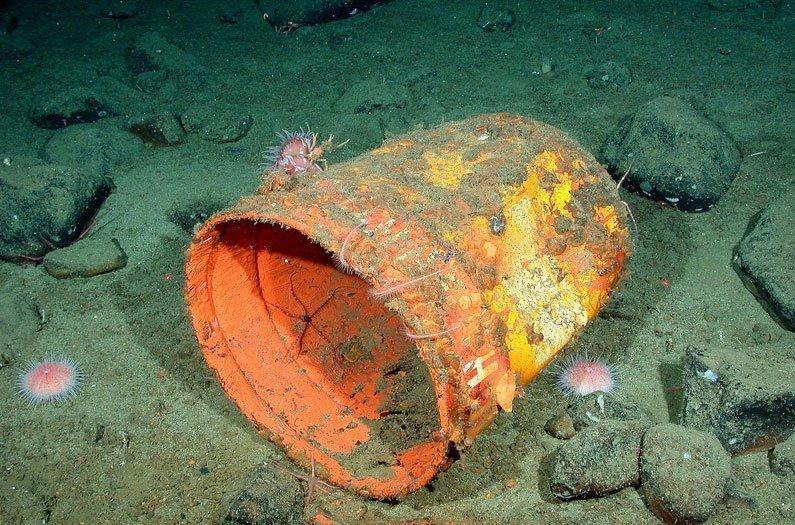 Para fazer com que os corais comam menos plástico, precisamos fazê-lo ter um gosto ruim