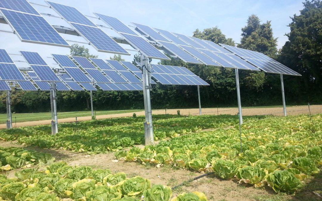 Doubling up crops with solar farms could increase land-use efficiency by as much as 60%