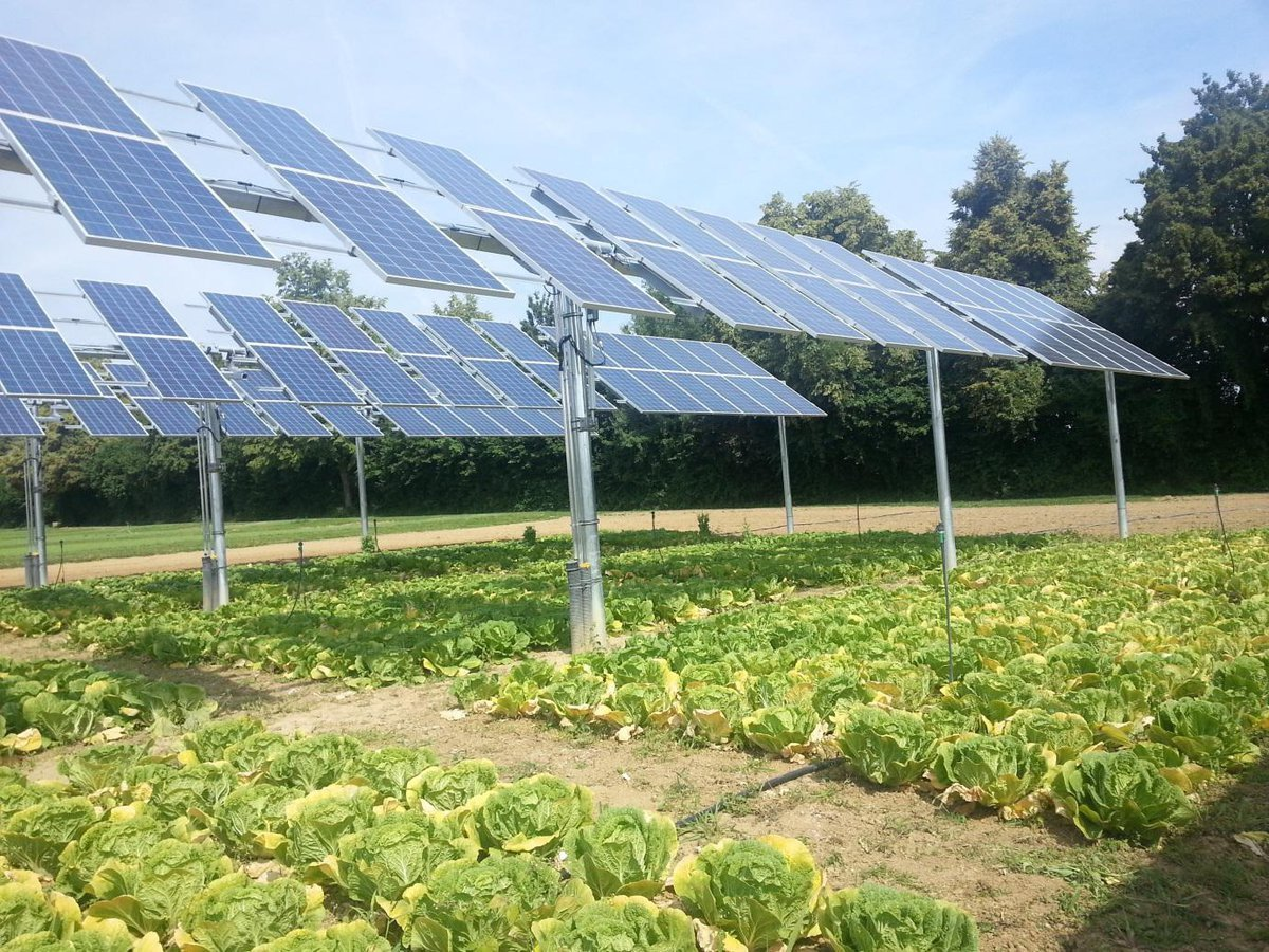 Image result for solar panels on farms