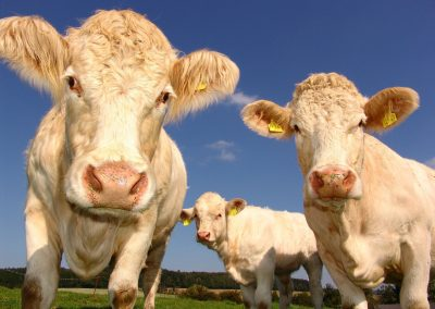 To understand the true impact of livestock farming, we need to get more personal with cows