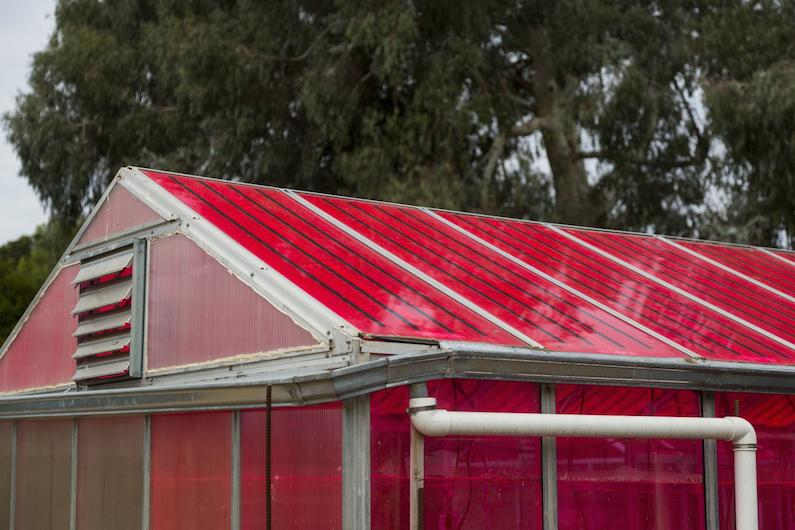 New Solar Greenhouse: A Greener Way to Grow Your Greens
