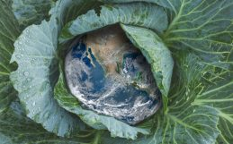 Recomendações alimentares para um planeta em aquecimento