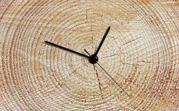 Podemos acelerar a criação de florestas antigas?