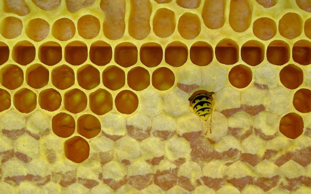 How many bee species does it take to pollinate a farm? Far more than you think.
