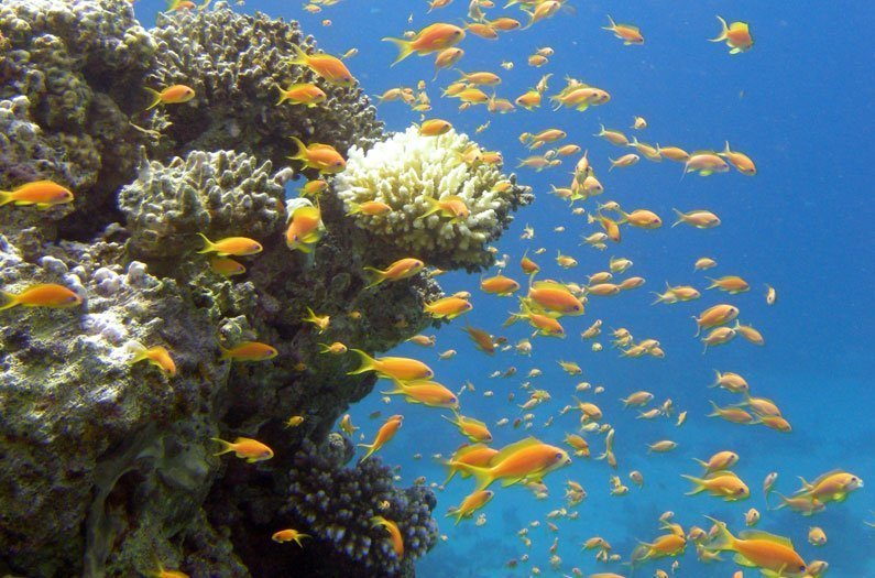 The amazing coral reefs that can survive climate change