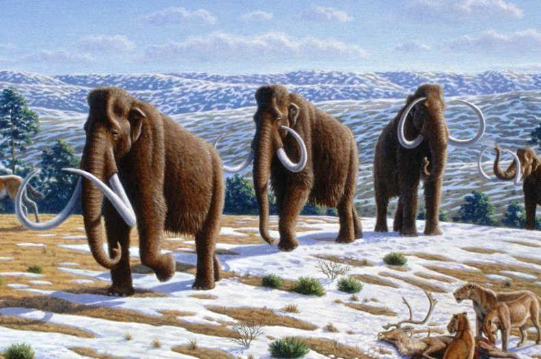 Can humans be more like woolly mammoths?