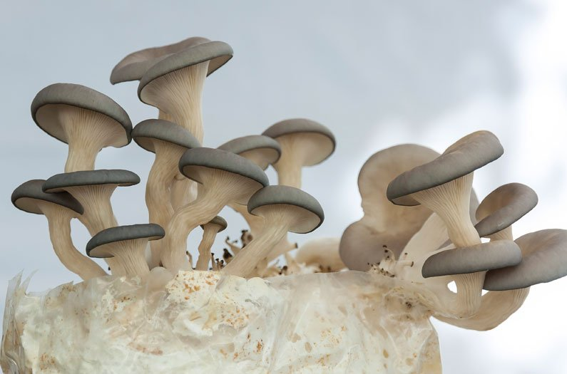 Mushroom farms hold a secret to sustainable biofuels