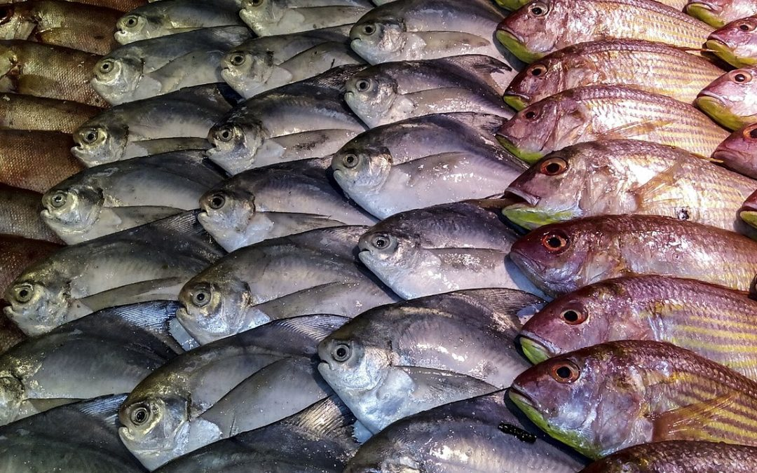 Diets rich in fish could save millions of hectares of land
