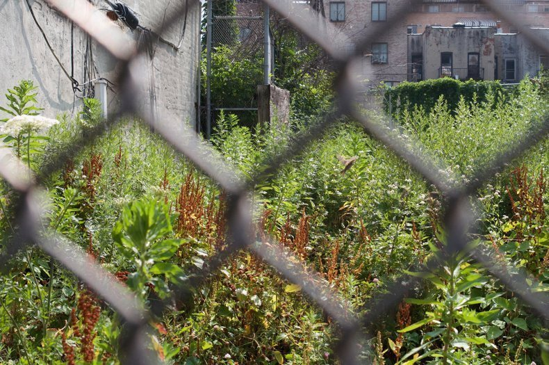 Vacant lots are full of nature. How do we keep them that way?