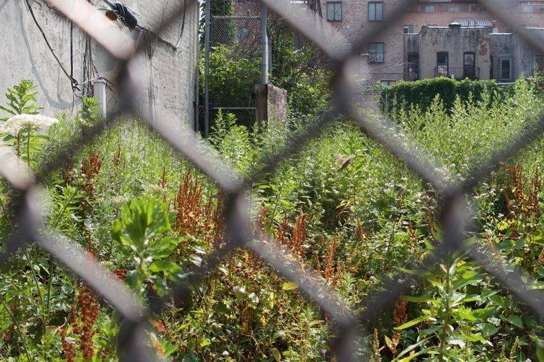 Los terrenos desocupados están llenos de naturaleza. ¿Cómo los mantenemos de esa forma?