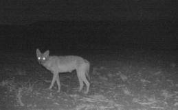 A medida que las personas confinan a los mamíferos a la noche, aparecen nuevos problemas.