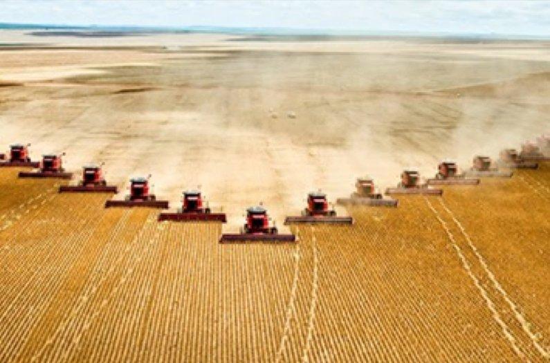 Desacelerar la expansión de la agricultura es la mejor manera de bloquear el carbono