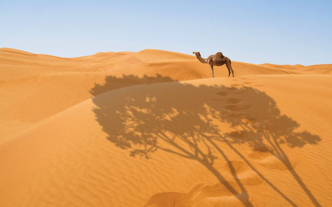 Wind and solar farms could turn the Sahara green for the first time in over 4,500 years