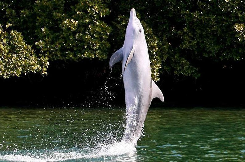 The conservation lesson of dolphins who walked on their tails