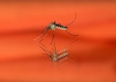The bad bugs of the Anthropocene