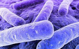 Purple Bacteria Convert Human Waste Into Renewable Fuel