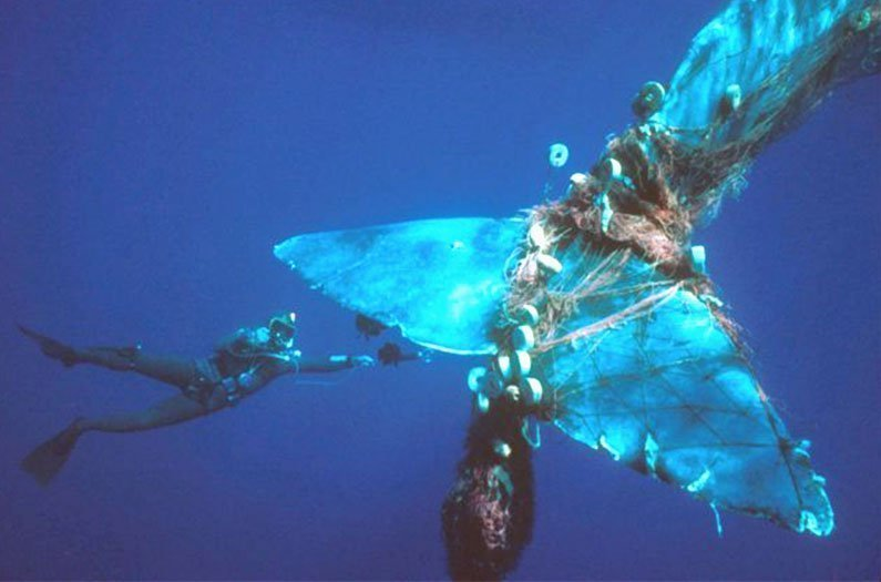 Should whale welfare be considered in sustainable fishing?