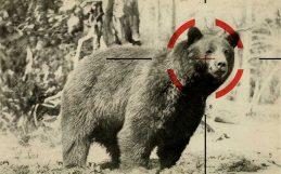 ¿Cuántos animales salvajes mata la gente?