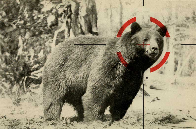 How many wild animals do people kill?