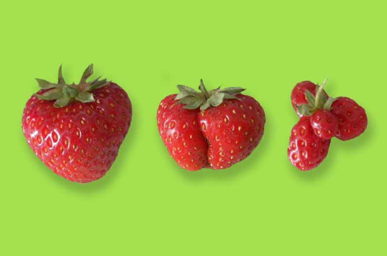 La construcción de hábitat para los polinizadores significa fruta más grande y mejor