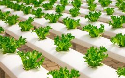 The trouble with the urban farming 'revolution'