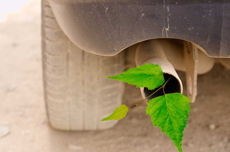 Not all trees are created equal when it comes to fighting air pollution