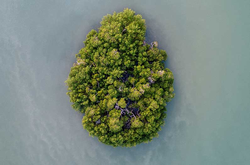Does an island lifestyle confer climate tolerance—if you're a plant?