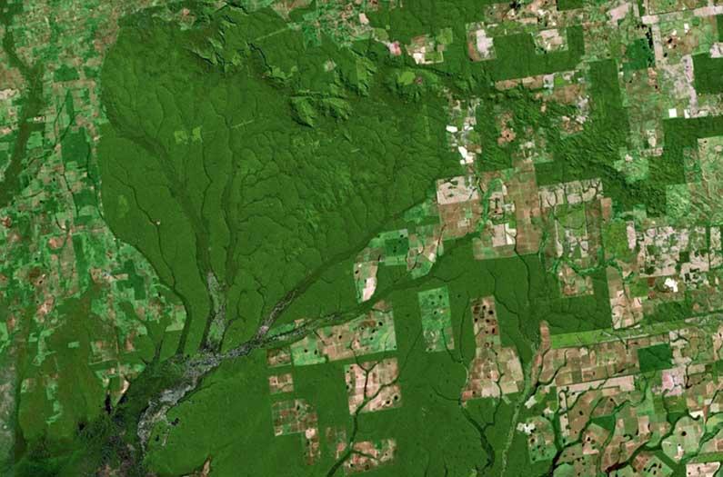 Cómo evitar que el Amazonas se queme