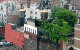 When adding green space reduces urban heat—and when it doesn't