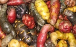 La clave para la seguridad alimentaria en África radica en el tesoro de la biodiversidad mundial de cultivos.