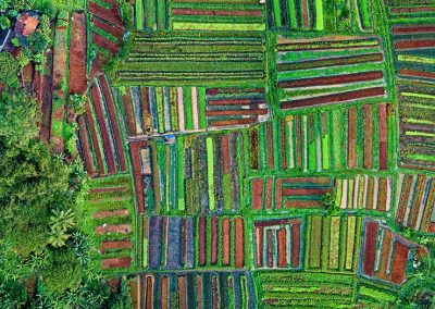 Satellite 'surveillance' reveals which sustainable farming methods work—and which don't